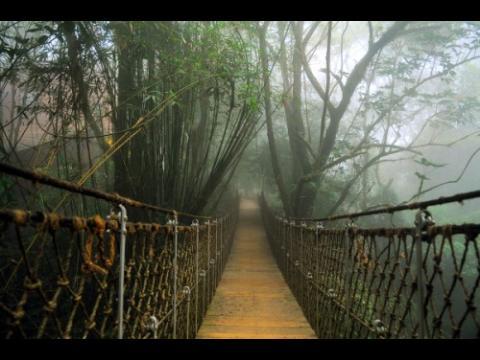 Why Visit Kerala ? (3/4)