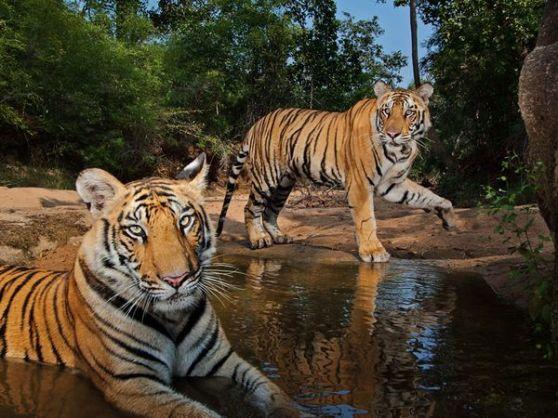 Gay Wildlife Tour - Chasing the Tiger